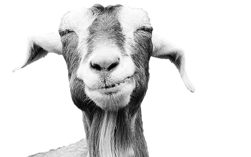 Goals & Goats (How do you set strategic SMART goals?)