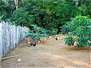 visiting the chickens bordom